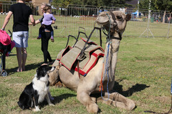 Amy and the Camel
