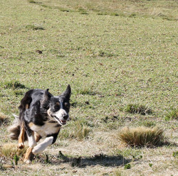 JKloof Pippa's Peat