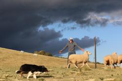 JKloof Andrew and Kenn bringing sheep ar