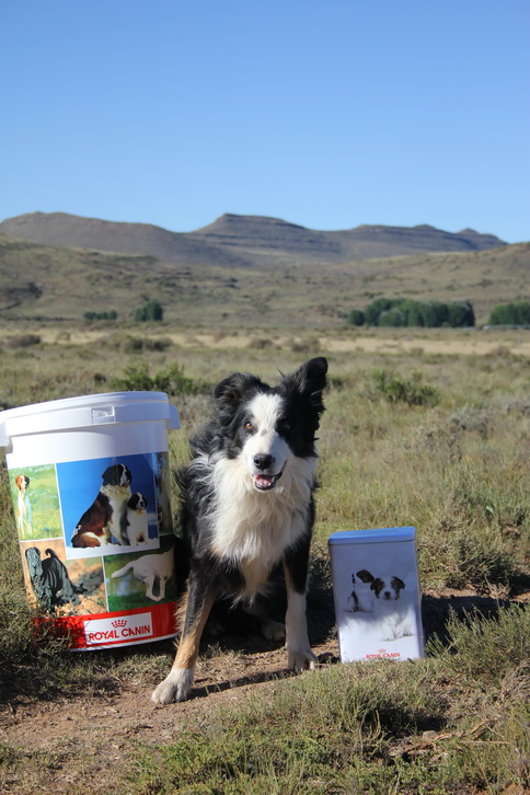 2 Royal Canin also sponsored great prizes Don impressed