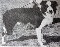Craig - Con Kingwill's 3 legged dog
