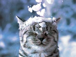 Снег, снежок, белая метелица....