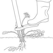 weeding-tool-weed-zinger-step2