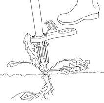 weeding-tool-weed-zinger-step