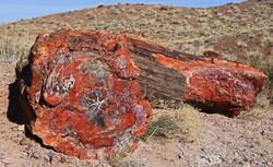 Petrified Wood - Petrified Forest, Arizona