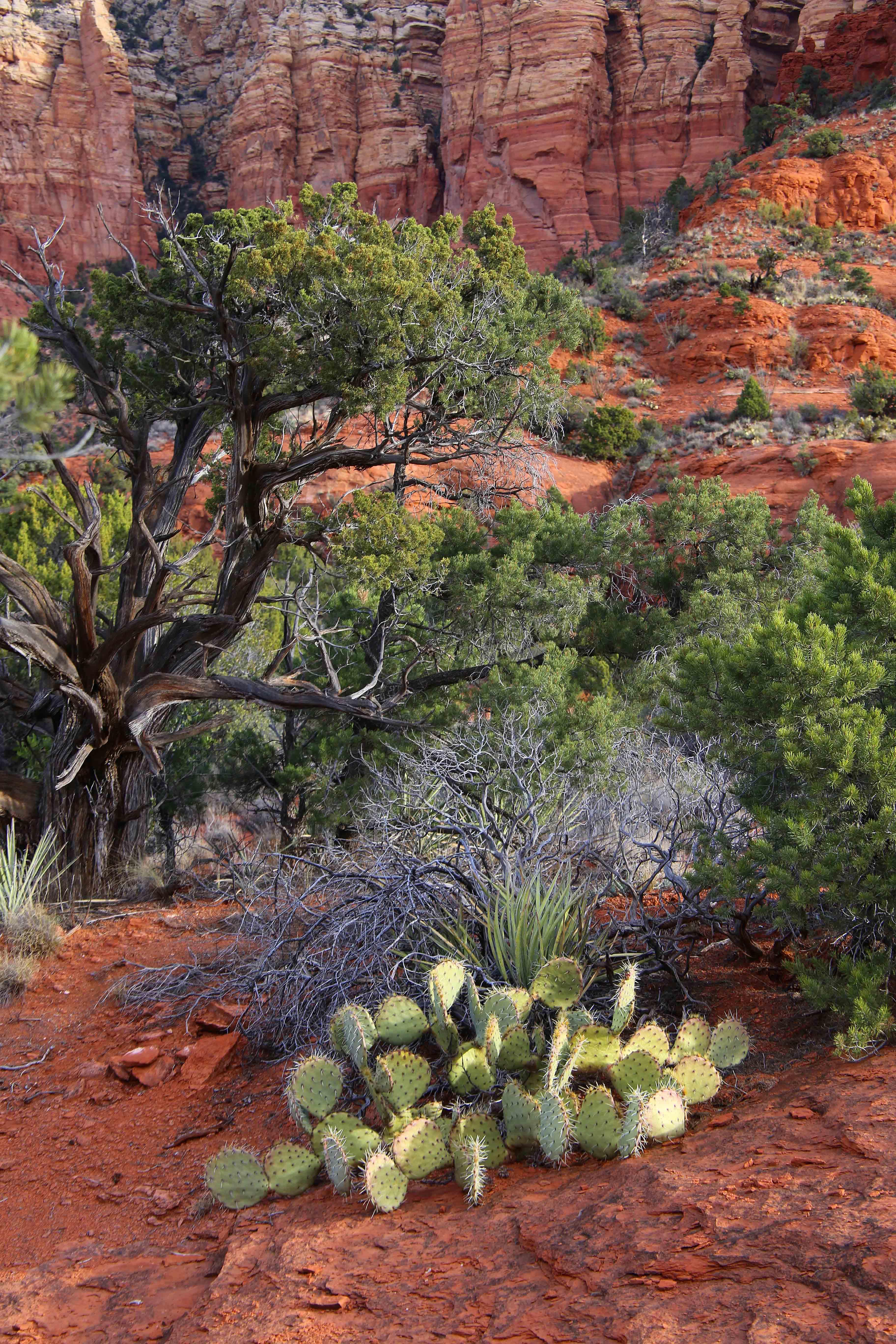 Desert Foliage - Sedona, Arizona