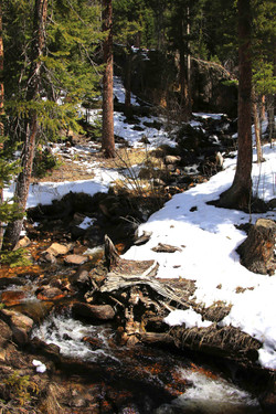 Mountain Stream - Estes Park, Colorado