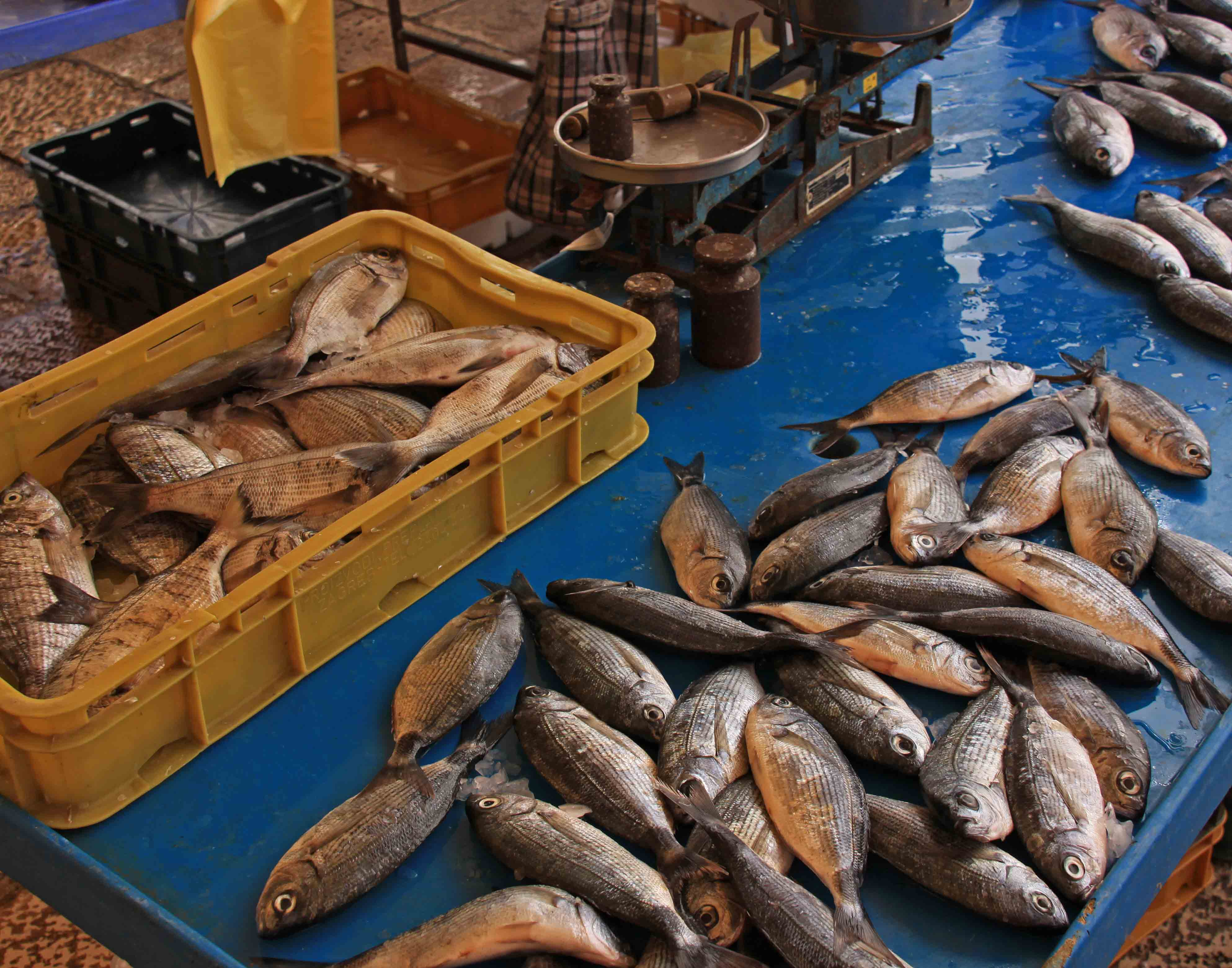 Fish Market - Split, Croatia