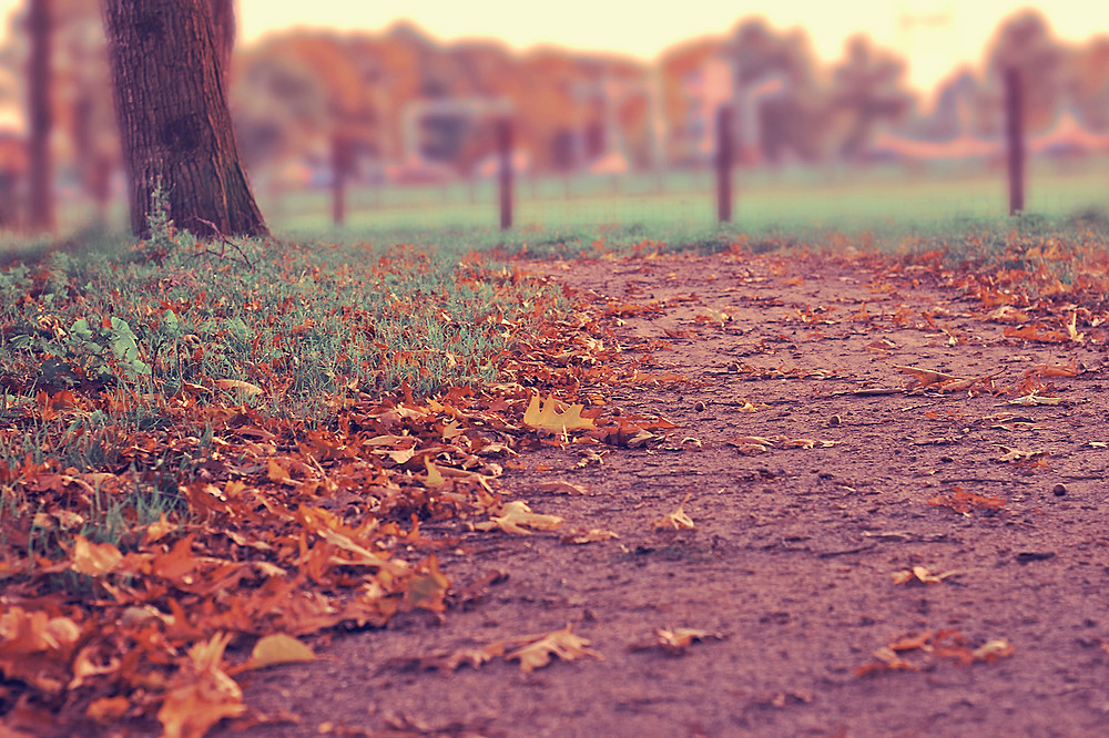 Fall leaves on a dirt path