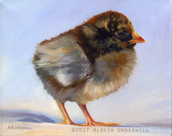 Little Brown Chick