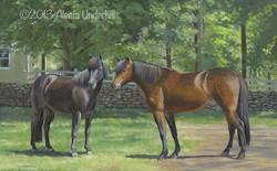 Tata & Sessa, Icelandic Horses