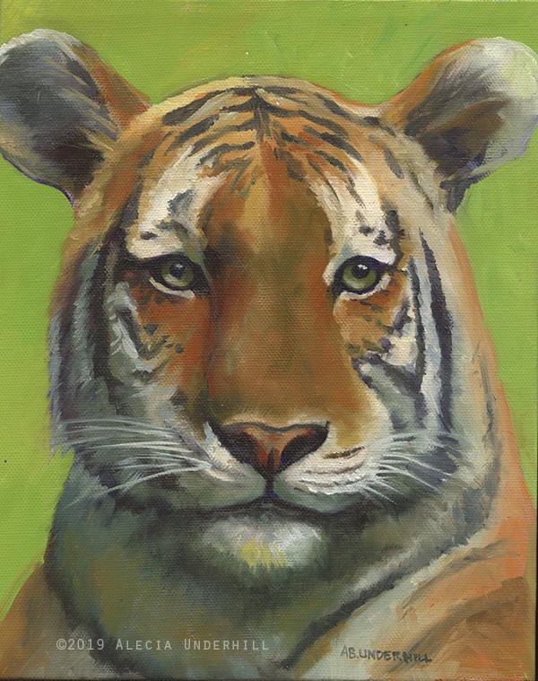 Bronx Tiger