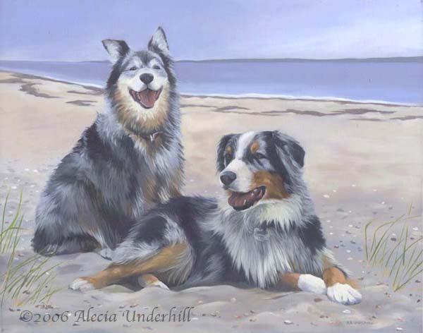 Alex and Sky, Australian Shepherds