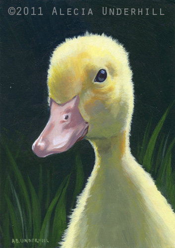 Duckling Study