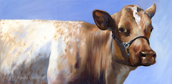 Roan Cow
