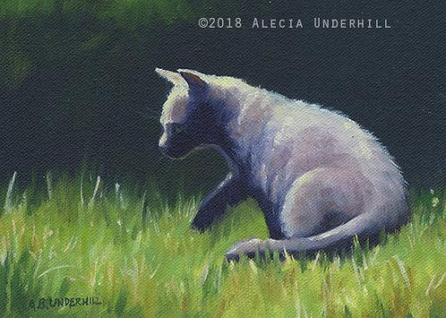 Grey Kitten I