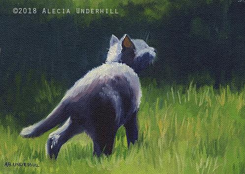 Grey Kitten II