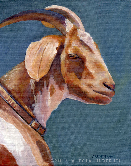 Brown & White Goat