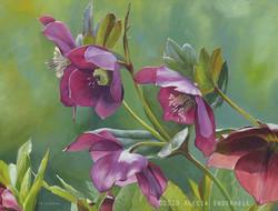 Lenten Rose (Hellebore)