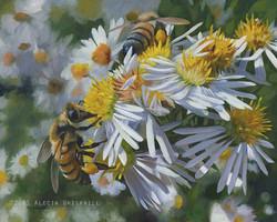 Pollinators, Wild Asters