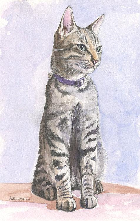 Studio Kitten