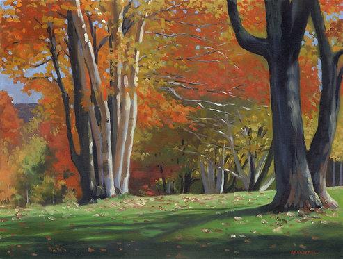 Berkshire Foliage