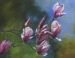 Pink Magnolia Branch