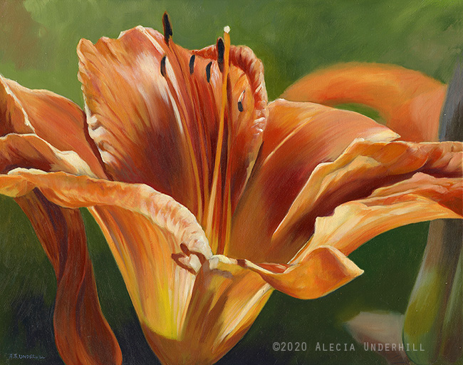 Orange Daylily II
