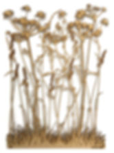 This is an image of wild grasses and plants cut out of MDF which sits off the wall and casts shadows. Made by Martha Ellis