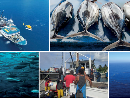MSC opens new markets for PNG's growing tuna catch