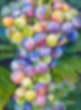 C-BB004 Wine on the Vine.jpg