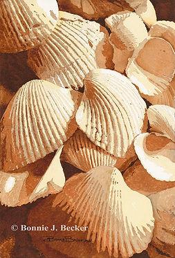 C-BB005 A Sea of Shells.jpg