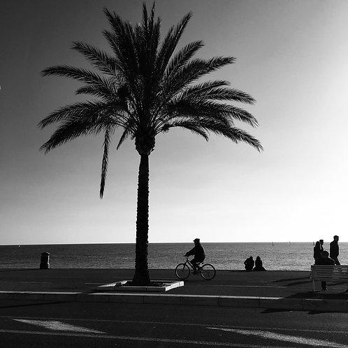 «La métaphore du palmier (...) » - Nice 2018 - série VILLES