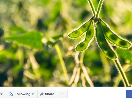 'Follow' Legumes Translated on social media to stay informed