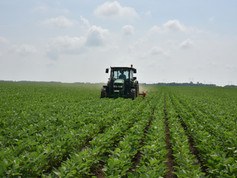 Soy-Crop-Cultivation-IFVC-May-2019 (1).J