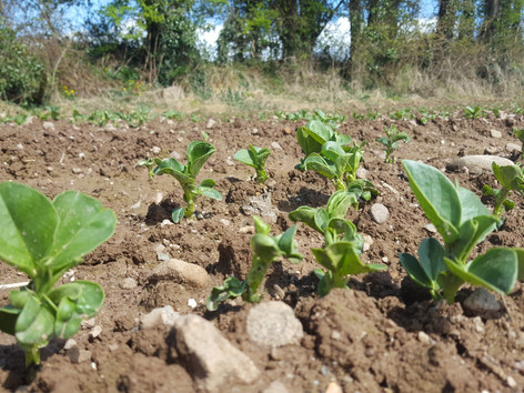 Spring-Bean-Emerging-Seedtech-May-2018 (