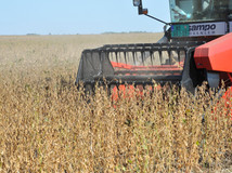Soy-Harvester-IFVC-October 2019.JPG