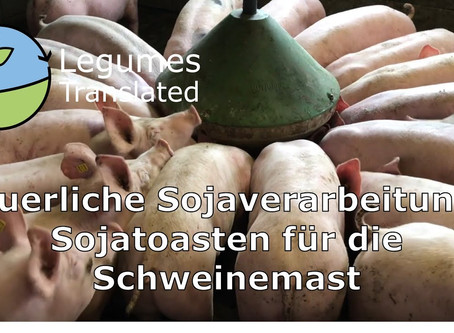 On-farm soy processing - toasting soy for pig fattening, Legumes Translated eleventh video published