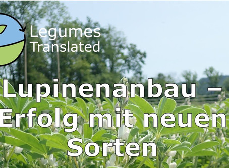 Lupin cultivation - Success with new varieties, Legumes Translated ninth video published