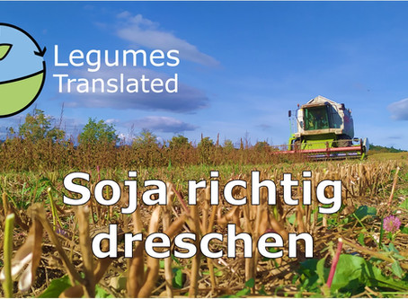 Threshing soya properly - Sixth Legumes Translated video published