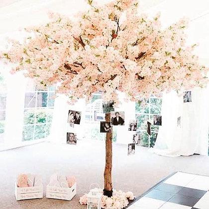 Blossom Memorial Tree