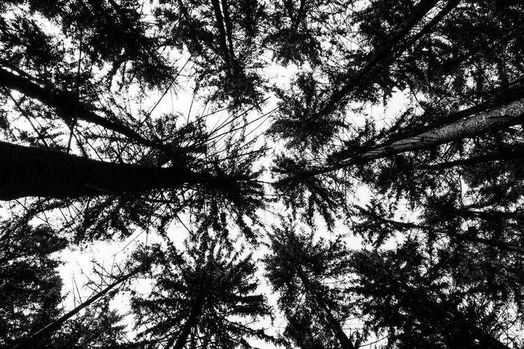 Heiberg Treetops