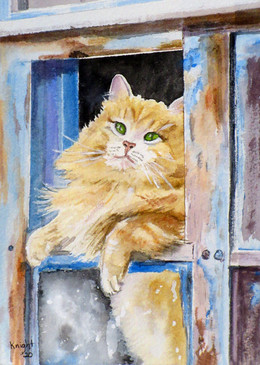 Tuscan Son: Leonardo in the Window  #6  Denise D. Knight  Watercolor  This watercolor depicts the easy-going Leonardo as he gazes out the window of an ancient outbuilding at the rustic seventeenth-century farmhouse-turned-B&B, where he lives in the heart of Chianti, Tuscany. Leonardo spends lazy days enjoying the charming landscape of the neighboring vineyards and olive groves from his well-worn window perch.  NFS
