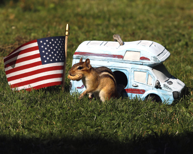 Chippy Goes Camping
