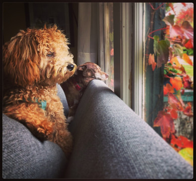 When is Mommy Coming Home?  #42  Beau Harbin  Peering through our window both Penny and Fiona were seeking different things. Penny is searching for Andrea's return, while Fiona is simply pondering the world outside.  NFS