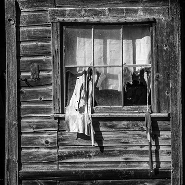 Tattered and Torn  #36  Sherry Dans  Photography  This photo represents the desolation we're all feeling these days. Battered and broken. Tattered and Torn. Tenacious to the end. Hoping for better times.  $75