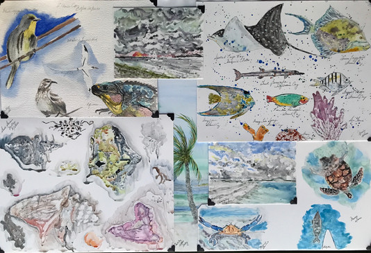 """Weather Window's Bounty  #17  Molly McGowan  Watercolor  """"Weather Window's Bounty"""" is a compilation of works that were done aboard the sailing vessel """"Castellammare"""". My husband and I sailed the Caribbean for the Winter of 2020. Everything pictured was seen by me and my husband. Windows of Weather Captain Mother Nature Rules Window? Yes! Set, sail!  NFS"""