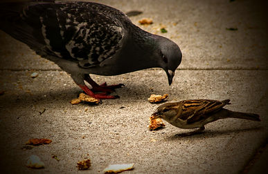 Birds feeding. Rockefeller University