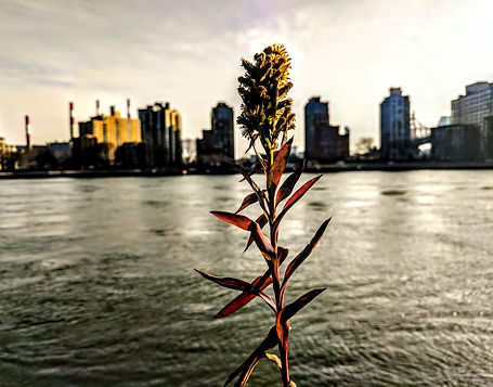 Plant. East River.