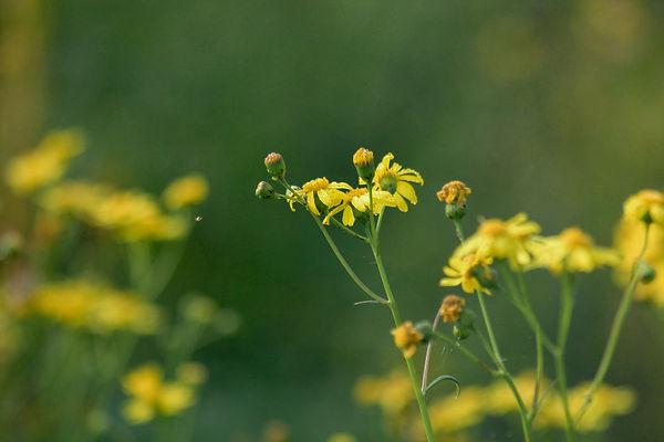flower about uspg (1 of 1).jpg
